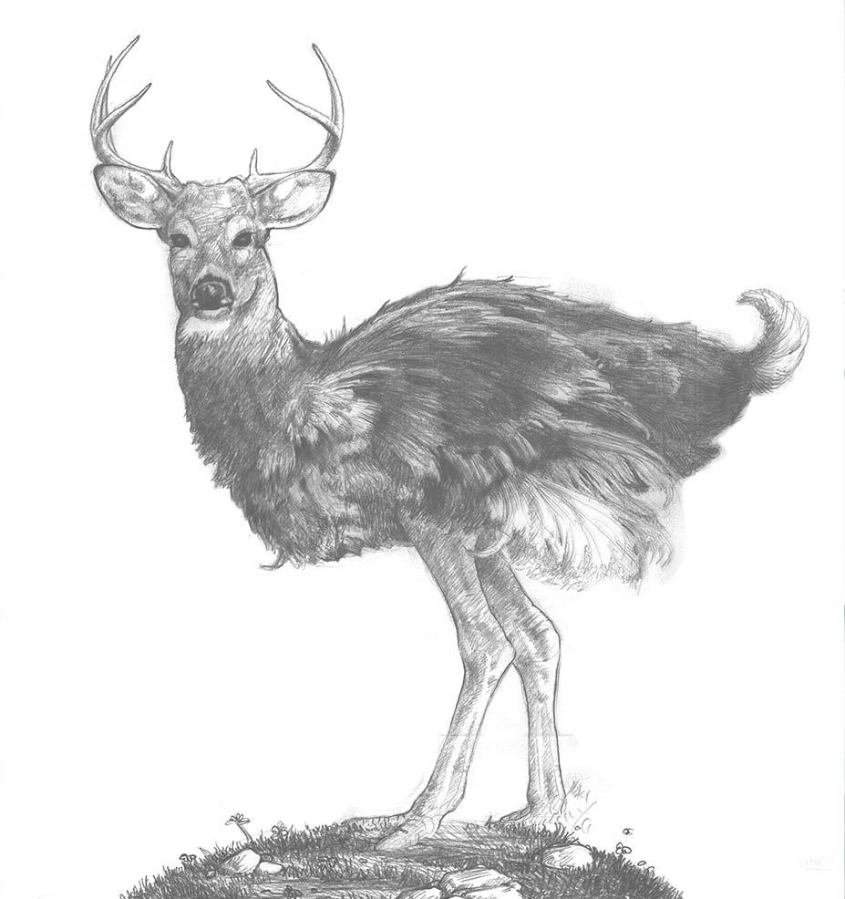 Deerstrich Sketch