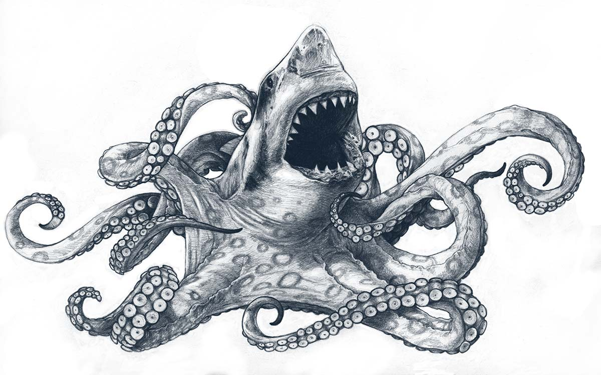 Sharktapus Sketch